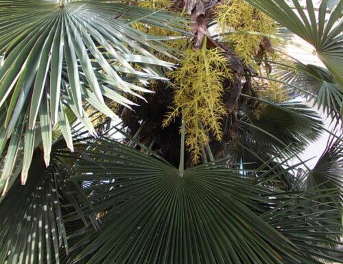 Sulla palma